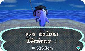 サメを……